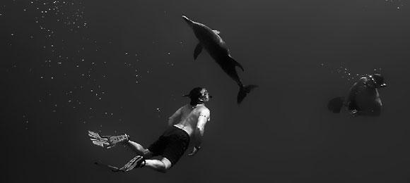 lou-diving