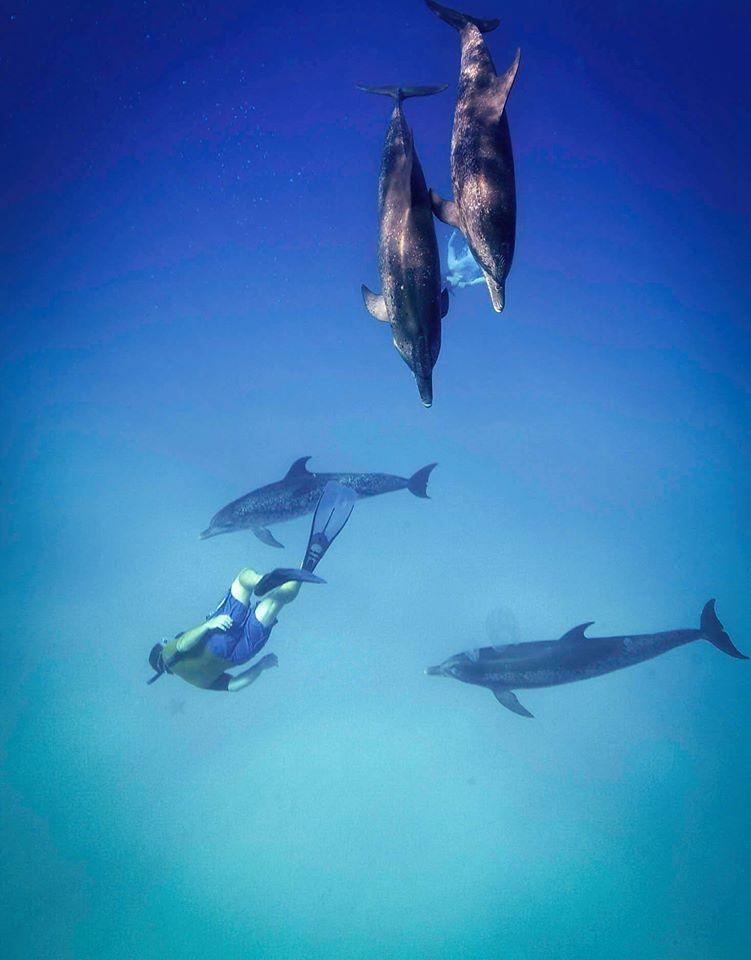 lou dolphin 14