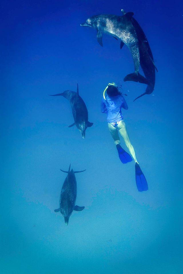 ly dolphin 14